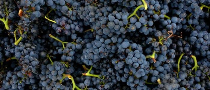 edit_grapes2